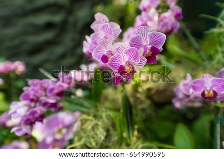 Beautiful light purple Phalaenopsis orchid flowers with natural background.