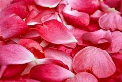 beautiful light red rose petal background image