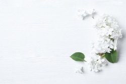 Beautiful lilac blossom on white wooden background, flat lay. Space for text