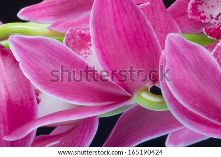 Beautiful lily flower - stock photo