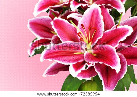 Beautiful Lily Flowers on a Pink Background