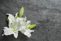 Beautiful lily flowers on grey stone background, top view. Space for text