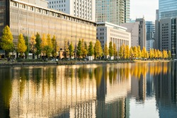 Beautiful line of Autumn trees infront of a still and lovely lake