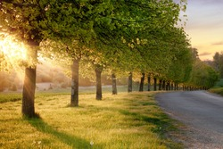 Beautiful line of trees alone a rural road at sunset. Natural landscape quiet English road scene in Norfolk UK