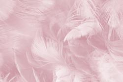 Beautiful lines violet - mauve mist colors tone feather texture background, pastek trends color
