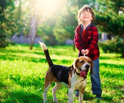 Beautiful little brunet hair boy, has fun smile face, happy eyes, dressed blue jeans, red plaid shirt. Plays with dog beagle. Child and animals portrait. Creative concept. Summer time.