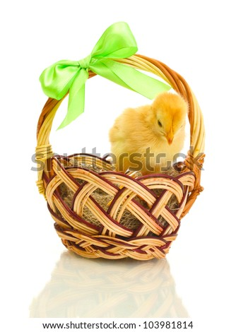 beautiful little chicken in basket isolated on the white
