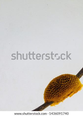 Beautiful little honeycomb 3 3 3 #1436091740