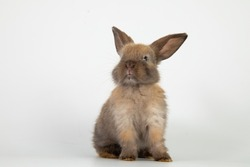 beautiful little new born baby bunny easter brown rabbit resting on white background. Lovely bunny easter rabbit. Animal symbol of easter day.