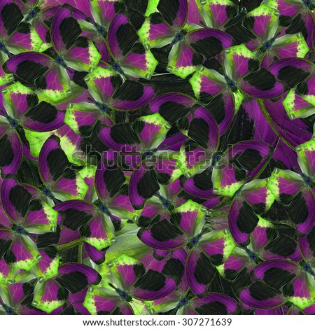 beautiful livery of green purple and black background and texture formed by the compilation of Large Assyrian butterflies