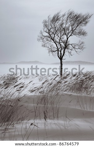 Beautiful lonely tree in winter. Snowy landscape