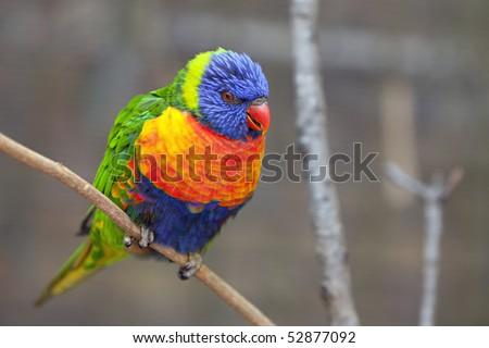 Blue and orange bird logo - photo#9