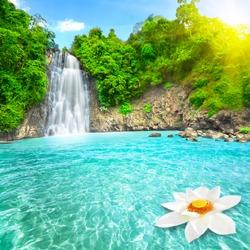 Beautiful lotus flower in waterfall pool. Vietnam