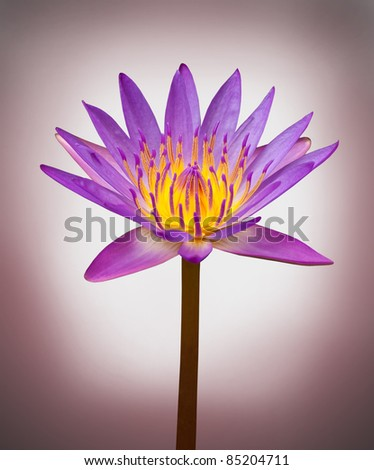Beautiful lotus on radial gradient background