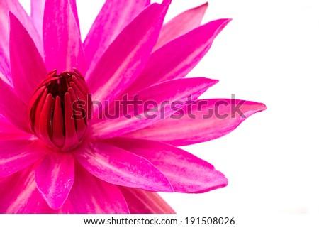 Beautiful lotus(Single lotus flower isolated on white background - Shutterstock ID 191508026