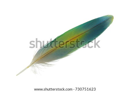Beautiful  lovebird feather on white background