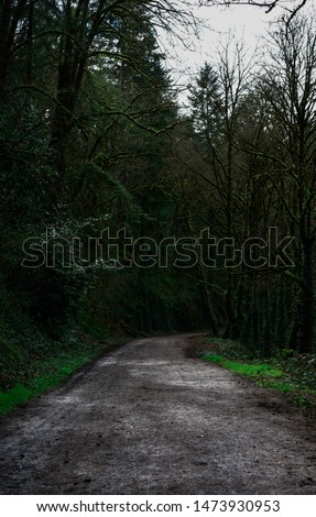 Beautiful lush green Portland hiking trail  #1473930953