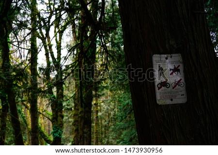 Beautiful lush green Portland hiking trail  #1473930956