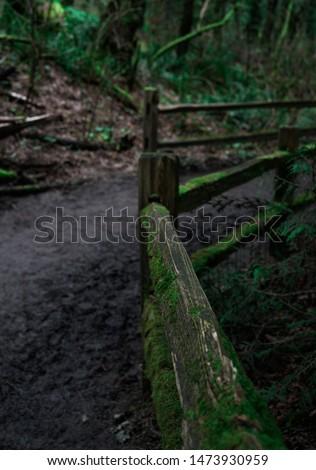 Beautiful lush green Portland hiking trail  #1473930959
