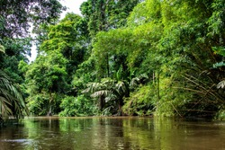 Beautiful lush green tropical forest jungle scenery seen from a boat in Tortuguero National Park in Costa Rica