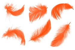 Beautiful  lush lava orange colors tone feather isolated on white background