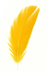 Beautiful Macaw feathers.