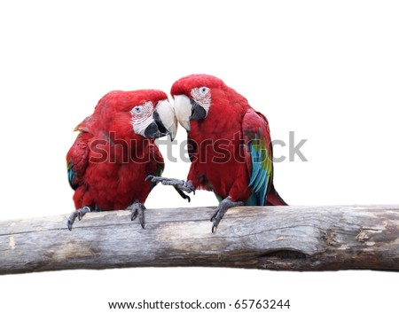 beautiful macaw parrots isolate don white background