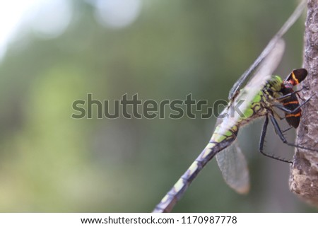 Beautiful macro dragonfly eating orange and black bug #1170987778