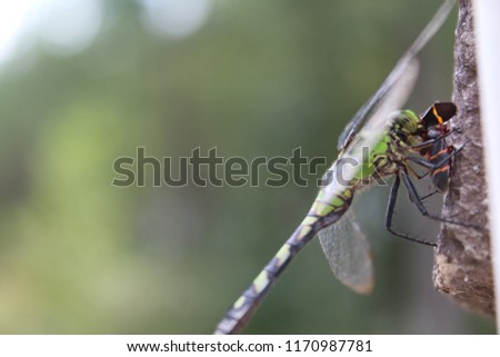 Beautiful macro dragonfly eating orange and black bug #1170987781