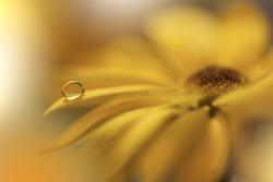 Beautiful macro shot of magic flowers.Border art design. Magic light.Extreme close up photography.Conceptual abstract image.Yellow Background.Fantasy Art.Creative Wallpaper.Beautiful Nature.Water Drop