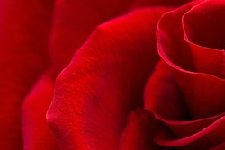 Beautiful Macro View of the Textures of a Crimson Red Rose