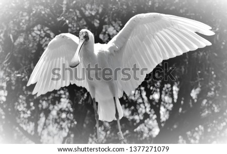 Beautiful majestic bird #1377271079