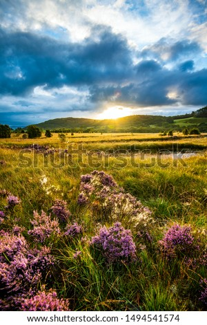 Beautiful marsh landscape at Cors Caron National Nature Reserve, Tregaron, Ceredigion, Wales