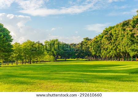 Beautiful meadow and tree in the park, Bangkok Thailand
