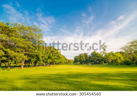 Beautiful meadow and tree in the park, Bangkok Thailand ストックフォト ©