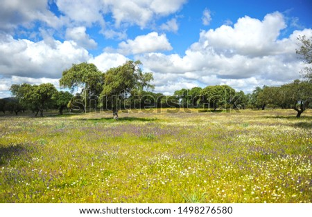 Beautiful meadow forest in the spring with blue sky and white clouds. Sierra Norte of Seville Natural Park Andalusia Spain Southern Europe #1498276580