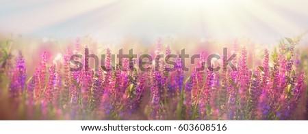 Beautiful meadow in spring - flowering purple flowers #603608516
