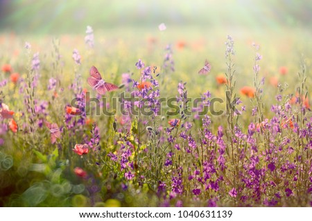 Beautiful meadow in spring - meadow flowers bathed in the spring sunlight