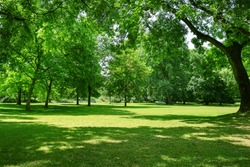 Beautiful meadow in the park