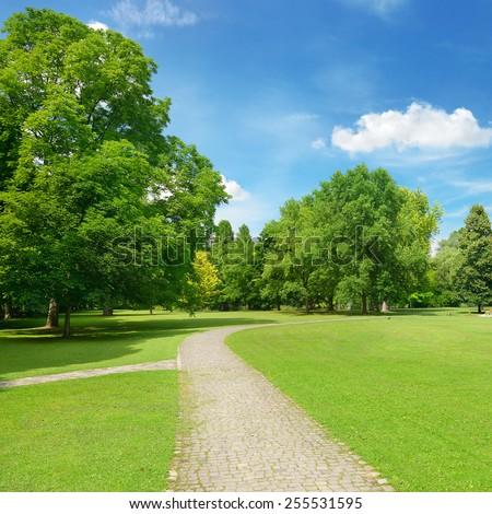 Beautiful meadow in the park - Shutterstock ID 255531595