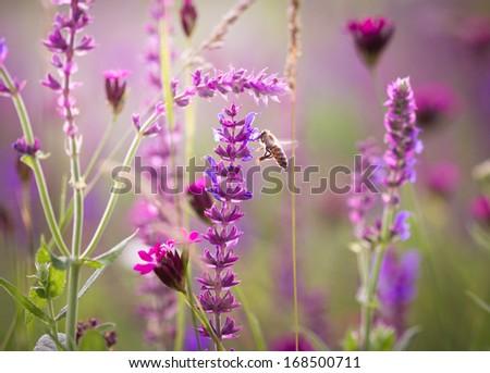 Beautiful meadow with wild flowers - stock photo