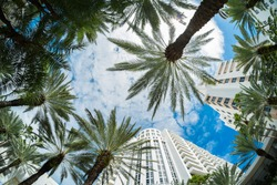 Beautiful Miami Beach fish eye cityscape with palm trees and art deco architecture.