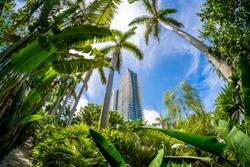 Beautiful Miami Beach fish eye cityscape with palm trees and lush foliage.