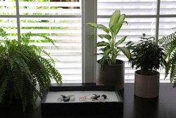 Beautiful miniature zen garden and potted plants on black table indoors