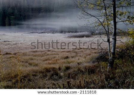 Beautiful misty morning fog in yosemite valley
