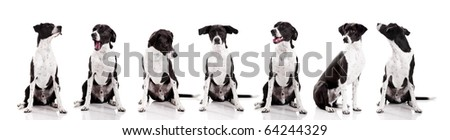 Beautiful mixed breed dog sitting and isolated on white background