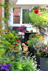 Beautiful modern terrace with a lot of flowers and funny cat