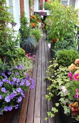Beautiful modern terrace with a lot of flowers and herbs