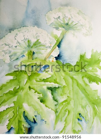 Beautiful modern watercolor painting of the Giant Hogweed or Wild Parsnip. This watercolor is made by me