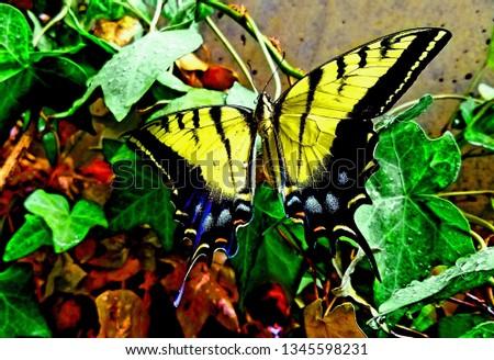 Beautiful Monarch Butterfly #1345598231